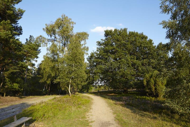 Download Luneburg荒地-有长凳的远足道路 库存照片. 图片 包括有 欧洲, 线性, 结构, 目的地, 农村 - 59100670