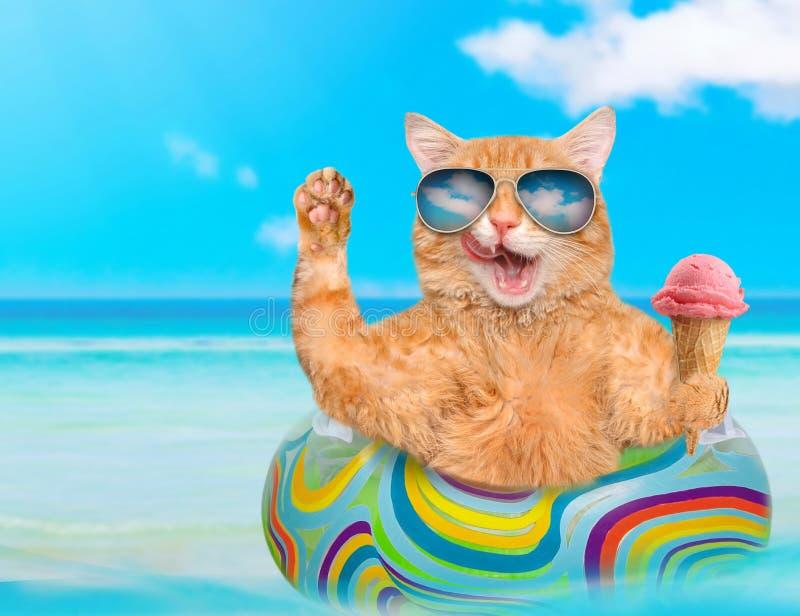Lunettes de soleil de port de chat détendant sur le matelas d'air en mer images stock