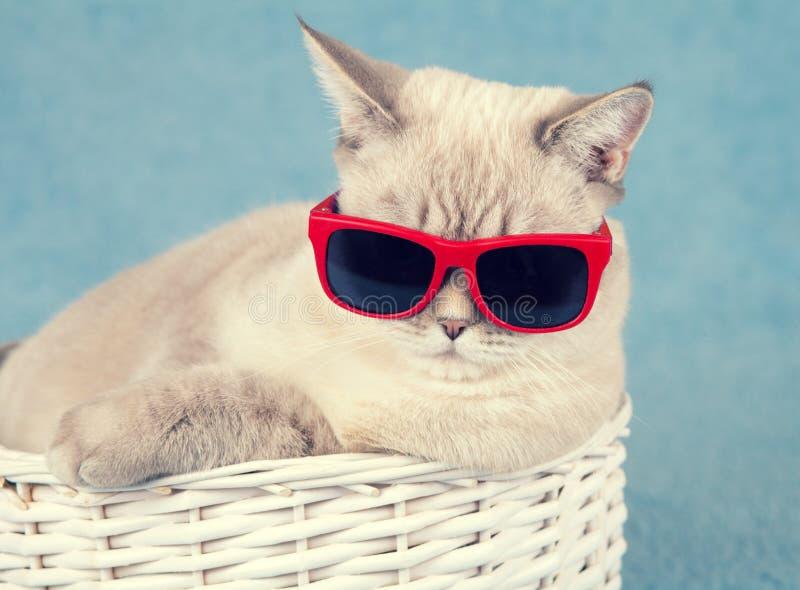 Lunettes de soleil s'usantes de chat image libre de droits