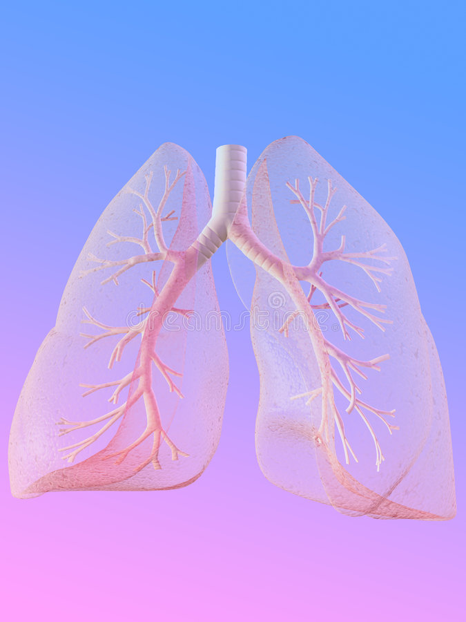 Lung royalty free illustration