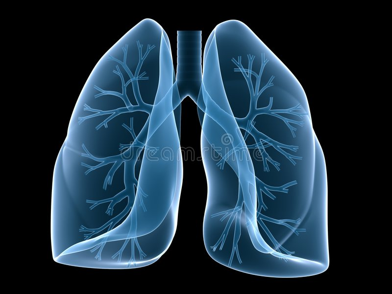 Lung and bronchi. 3d rendered anatomy illustration of human lung with bronchi stock illustration