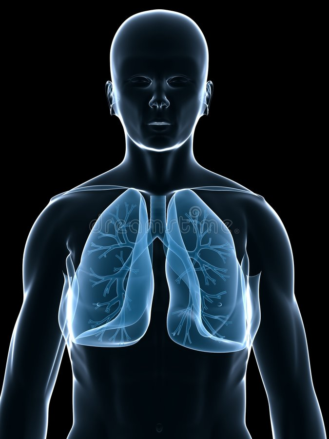 Lung and bronchi. 3d rendered anatomy illustration of human shape with lung and bronchi stock illustration