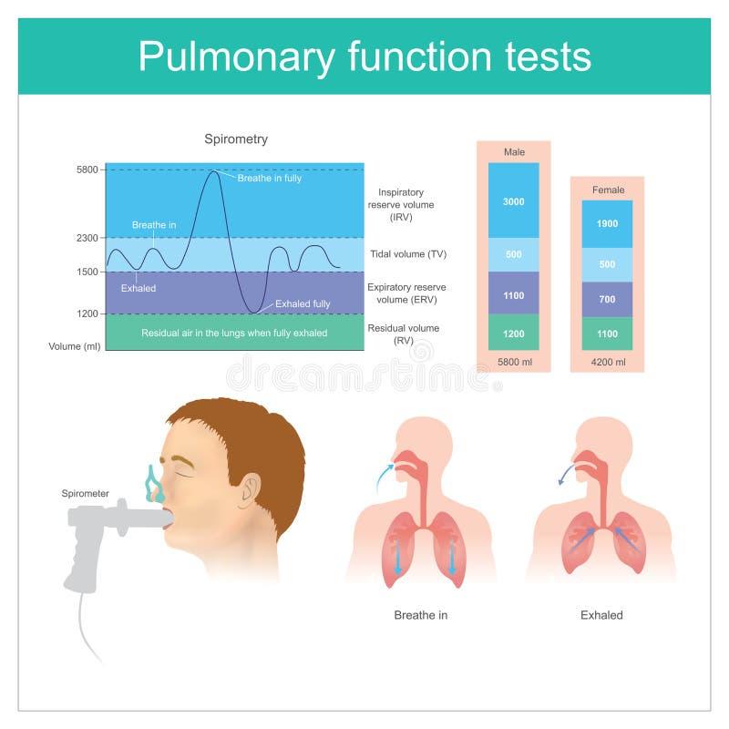 Lung- funktionsprov Provning för volym av luft i lungorna royaltyfri illustrationer