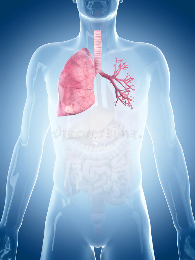 The lung. Medically accurate illustration of the lung stock illustration