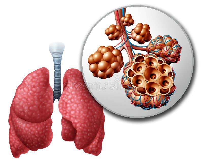 Lung Pulmonari Alveoli ilustração do vetor