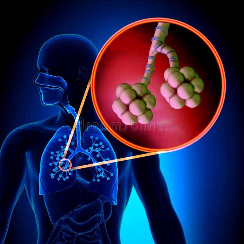 Lungaalveoler - mänsklig anatomi för respiratoriskt system stock illustrationer