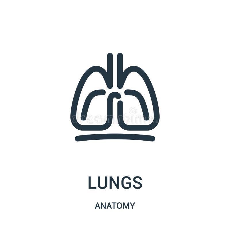 lungasymbolsvektor från anatomisamling Tunn linje illustration för vektor för lungaöversiktssymbol Linjärt symbol för bruk på ren vektor illustrationer