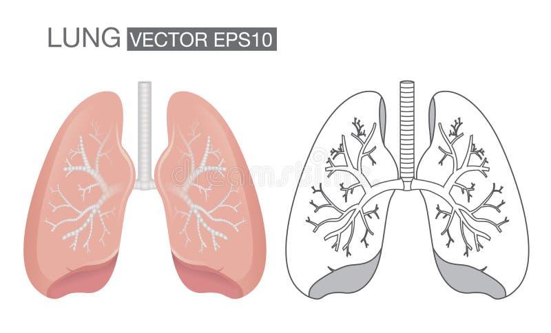 Lungavektor vektor illustrationer
