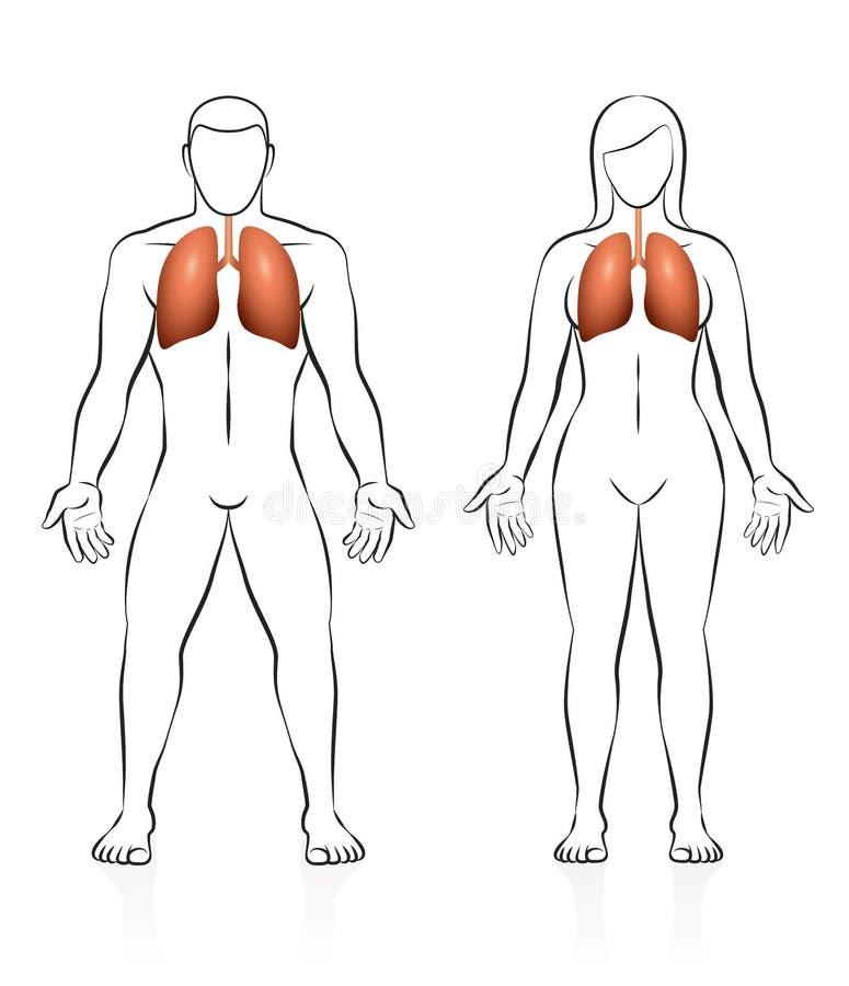 Großzügig Weiblicher Körper Ideen - Menschliche Anatomie Bilder ...
