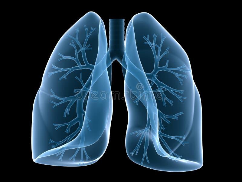 Lungenflügel und Bronchien stock abbildung