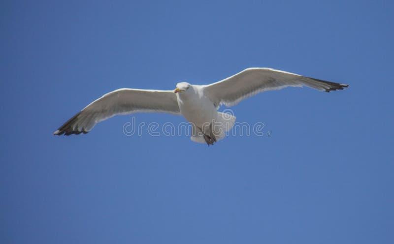 Lungonmare di Brighton - gabbiano e un cielo blu fotografia stock