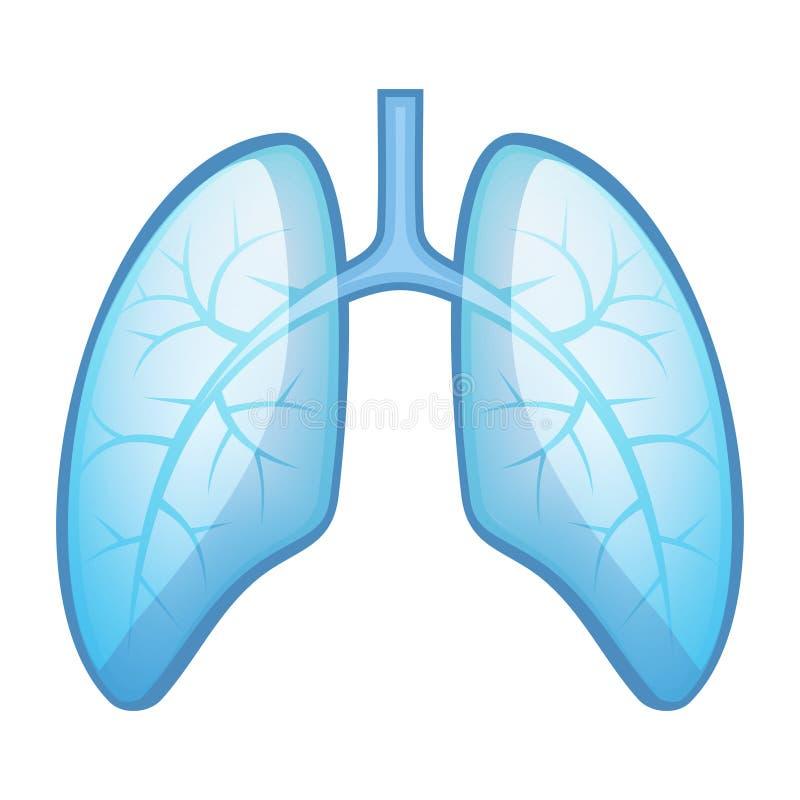 Lungor och luftrör för mänsklig hälsa royaltyfri illustrationer