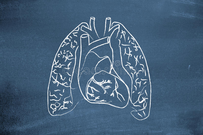 lungs stock illustrationer