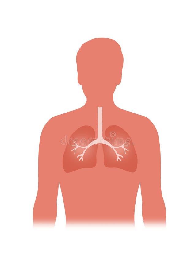 lungs vektor illustrationer