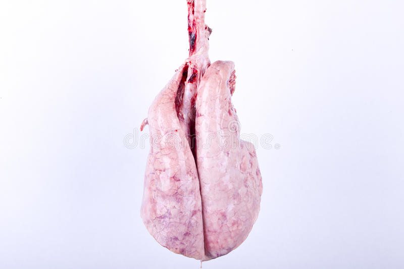 Download Lungs Royalty Free Stock Image - Image: 25700546