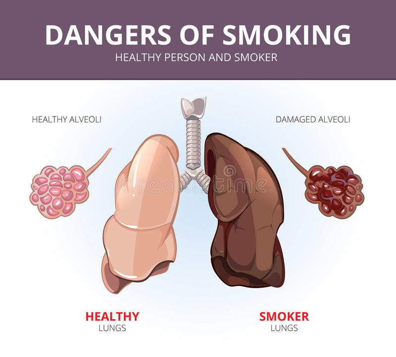 an analysis of the hazards and dangers of smoking in society Perceptions about cigarette smoking and risks among college students rebecca murphy-hoefer, stephen alder, cheryl higbee  issn 1462-2203 print/issn 1469-994x online # 2004 society for.