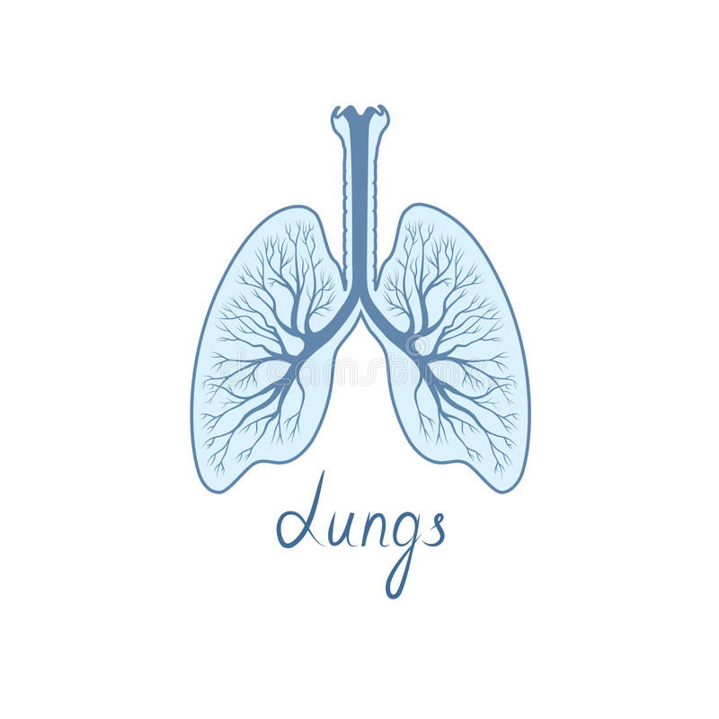 Lungs Detailed Sign. Human Internal Organ Anatomy Icon Stock ...