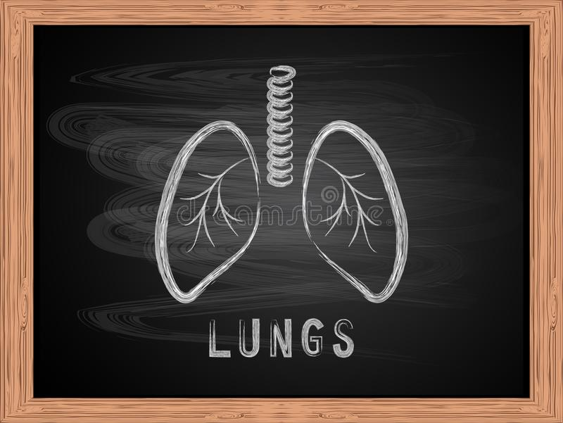 Lungs icon on blackboard flat design. Lungs icon on blackboard flat design vector Illustration vector illustration