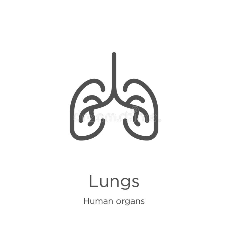 lungs icon vector from human organs collection. Thin line lungs outline icon vector illustration. Outline, thin line lungs icon stock illustration