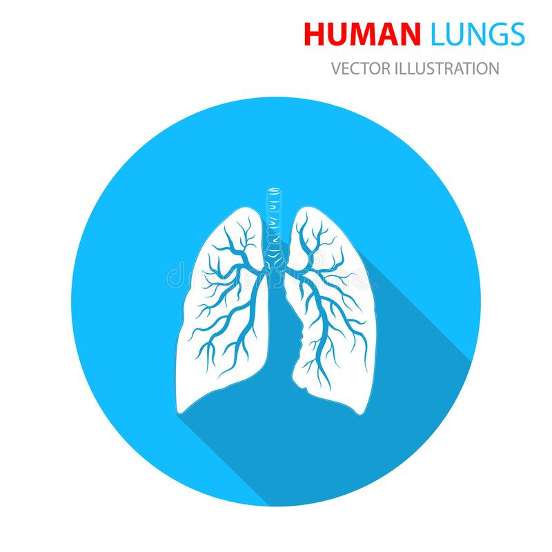Lungs icon, flat style. Internal organs of the human. Vector illustration royalty free illustration