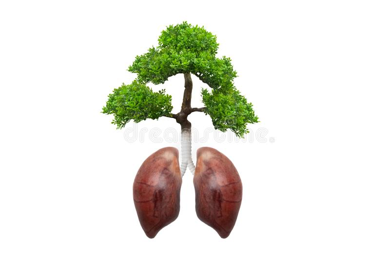 Lungs tree.Healthy life concept. Forest protection concept good environment stock photo