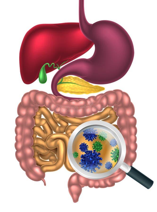 Lupa das bactérias do intestino ilustração royalty free