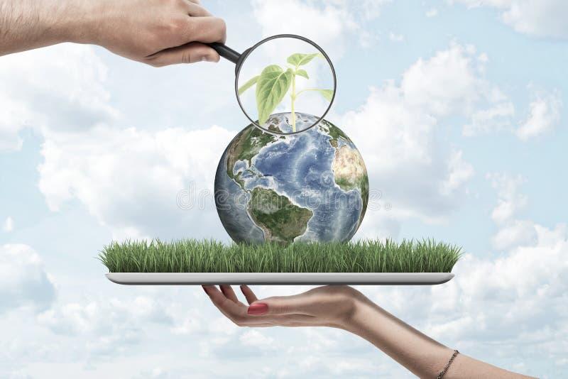 Lupe in der Hand des Mannes, die am grünen Sprössling auf kleiner Planet Erde liegt auf Schirm der digitalen Tablette laut summt, stockbilder