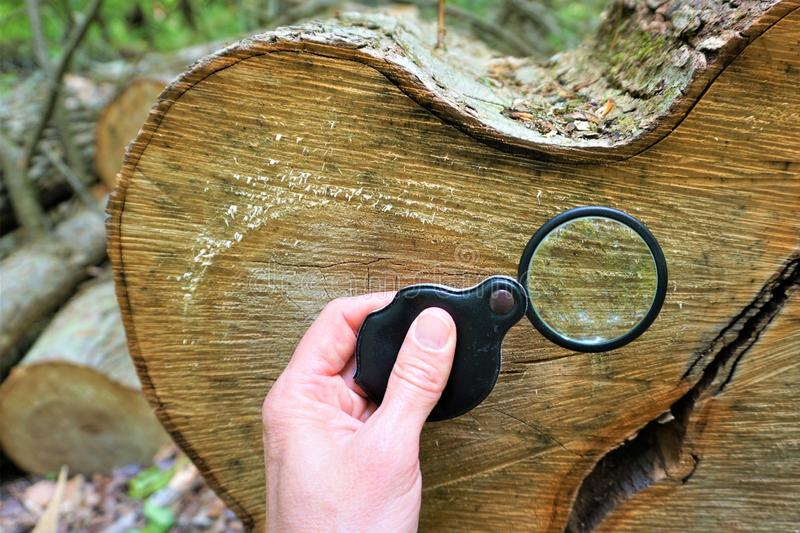 Lupe vergrößert Baumringe lizenzfreie stockfotografie
