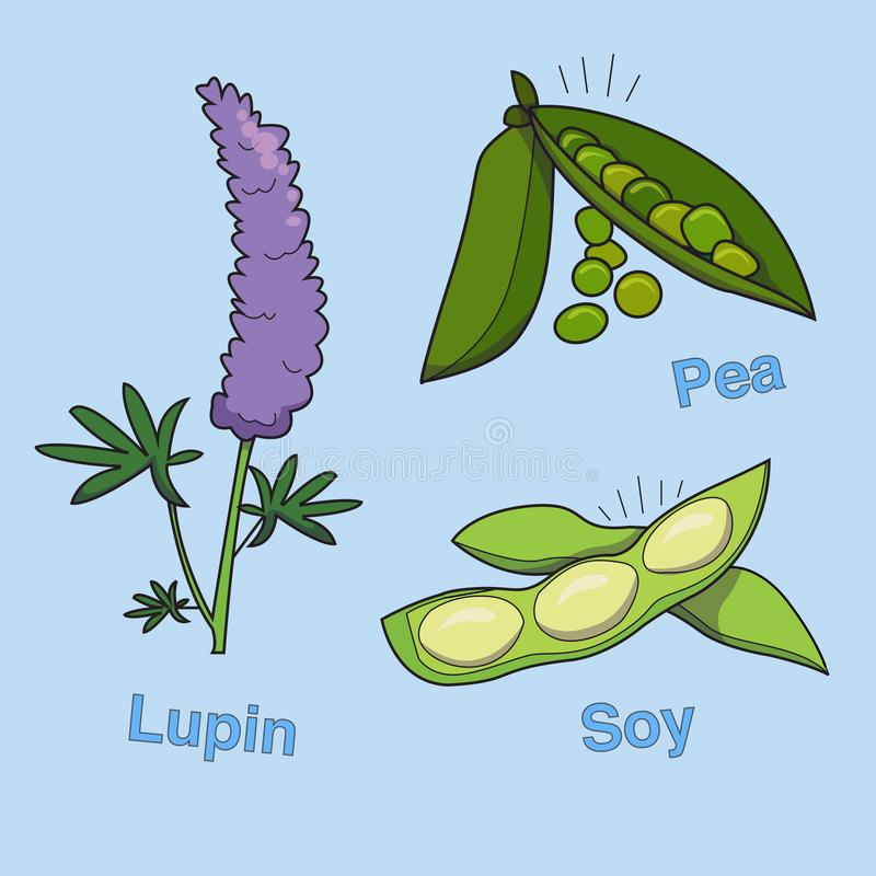 Lupin, pea and soybean stock illustration
