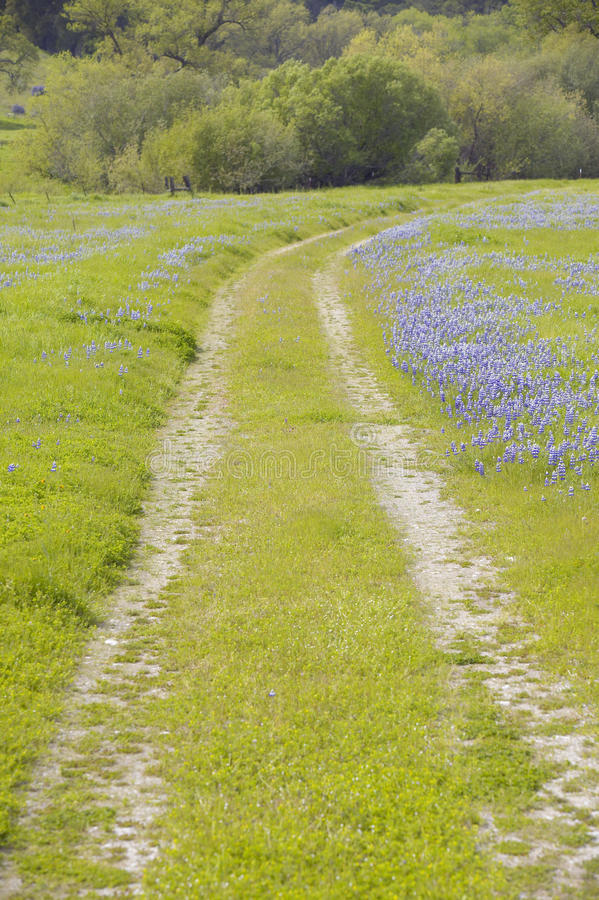 Download Lupine lined dirt road stock image. Image of green, fresh - 26265285