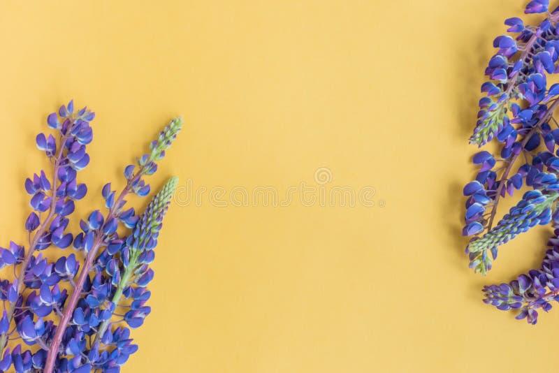 Lupinebloem op een gele achtergrond stock fotografie