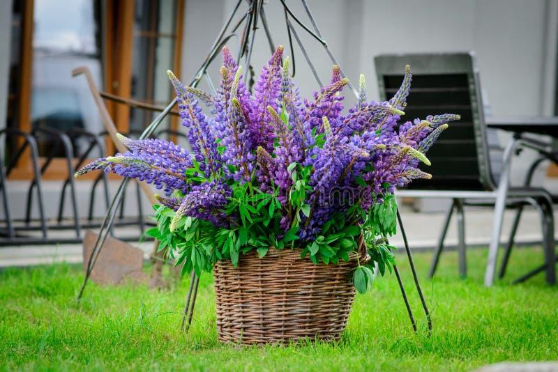 Lupinebloemen in een rieten mand stock foto's