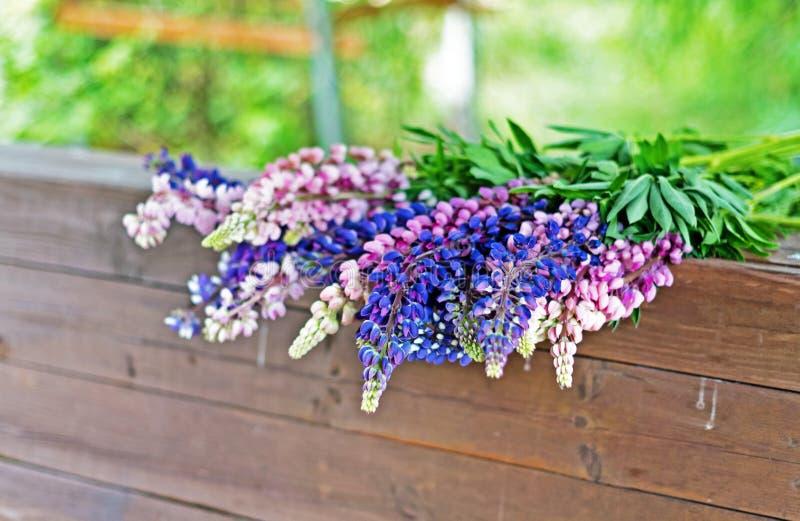 Lupinefältet med rosa lilor och blått blommar Bukett av blom- bakgrund för lupinessommar royaltyfria bilder
