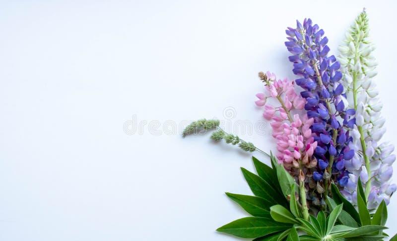 Lupinen in der Ecke des weißen Hintergrundes lizenzfreie stockfotos