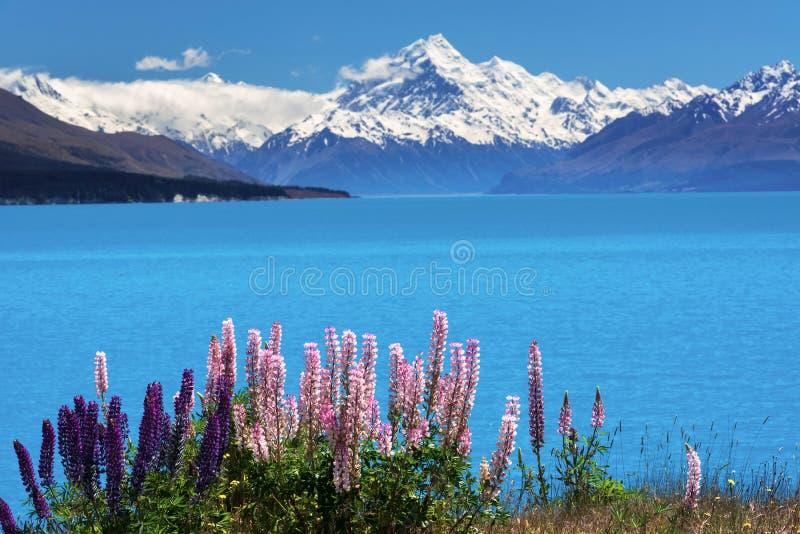 Lupines na costa do Mt Cozinheiro, Nova Zelândia fotos de stock