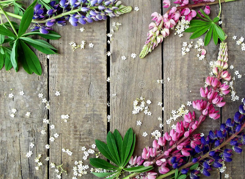 Lupines roxos e cor-de-rosa no fundo de madeira fotografia de stock