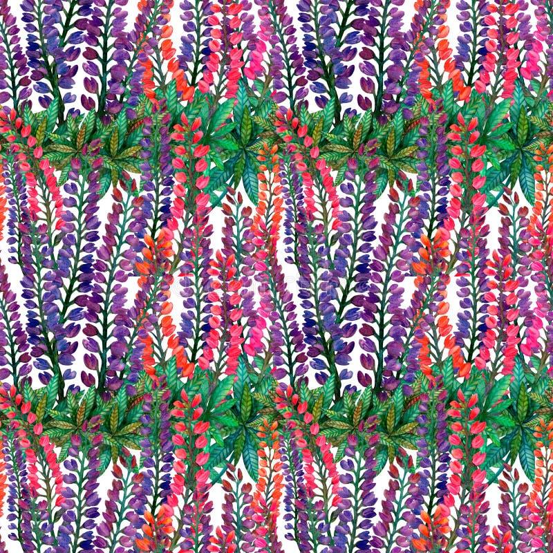 Lupins d'aquarelle Modèle de fleur coloré lumineux sans couture d'été sur le blanc illustration stock