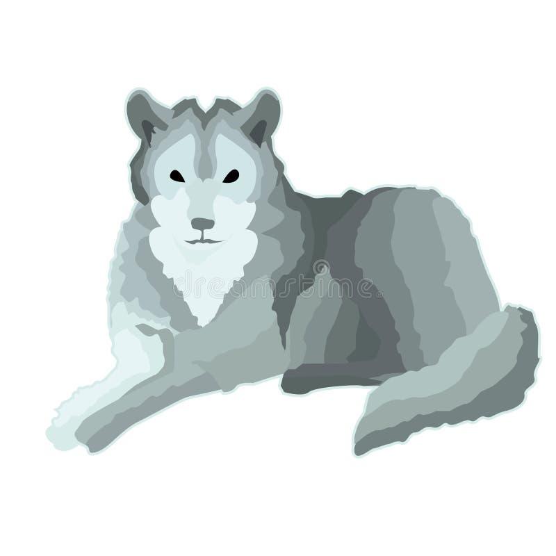 Lupo calmo grigio dell'autoadesivo illustrazione di stock