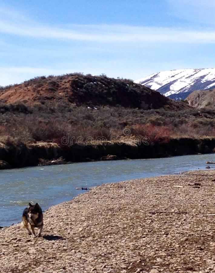 Lupo in montagne di Colorado che trascurano Boulder immagine stock libera da diritti