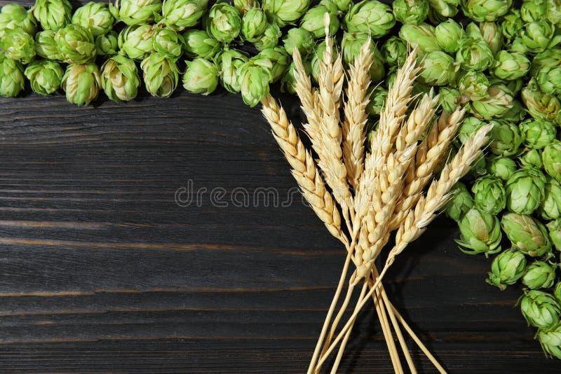 Luppolo di verde e punte freschi del grano fotografie stock