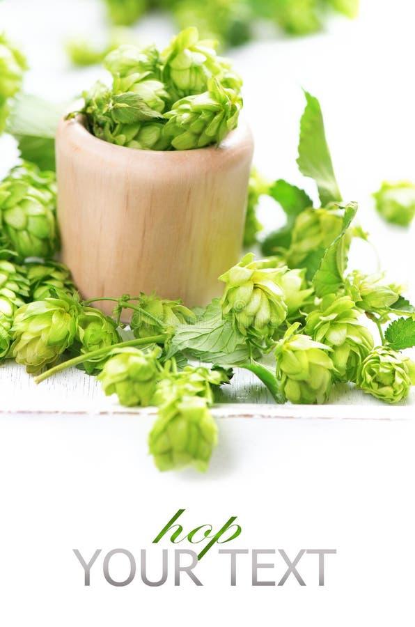 Luppolo verde in ciotola di legno sopra fondo bianco immagini stock
