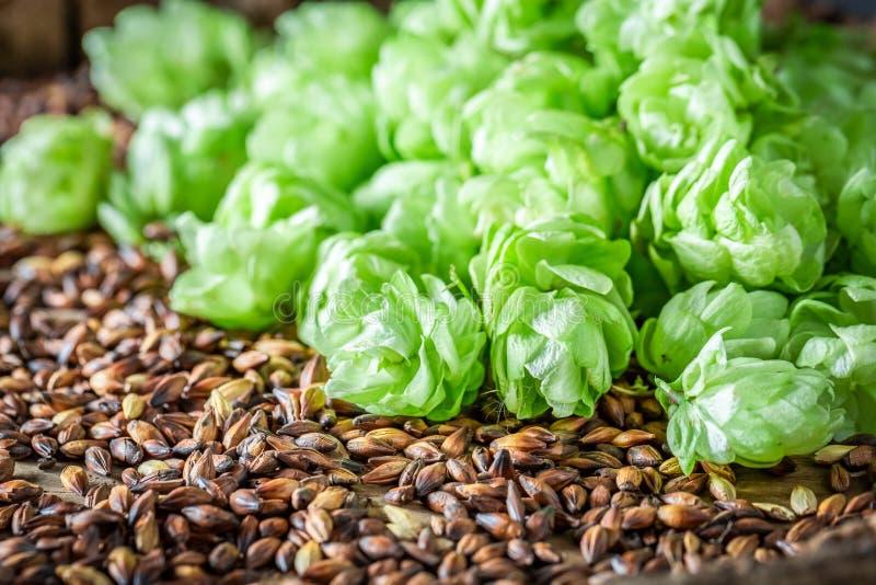 Luppolo verde e malto marrone come ingredienti per birra fotografia stock libera da diritti