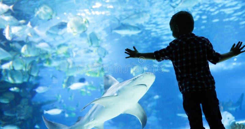 Lura att hålla ögonen på stimen av fisksimning i oceanarium royaltyfri fotografi