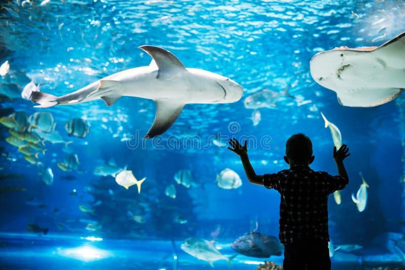 Lura att hålla ögonen på stimen av fisksimning i oceanarium royaltyfria foton