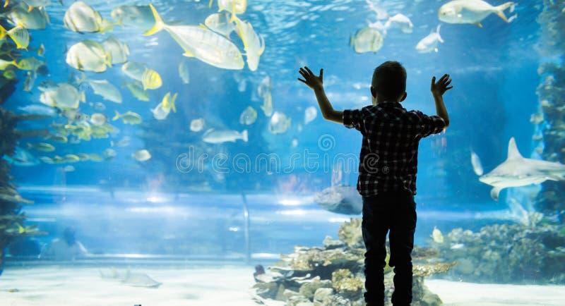 Lura att hålla ögonen på stimen av fisksimning i oceanarium royaltyfria bilder