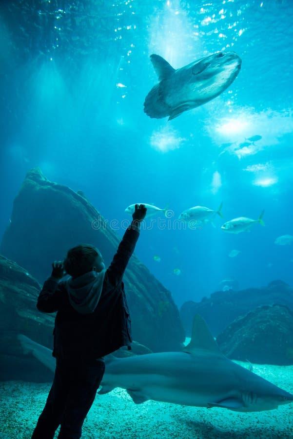 Lura att hålla ögonen på stimen av fisksimning i oceanarium Fiskmåne royaltyfri fotografi