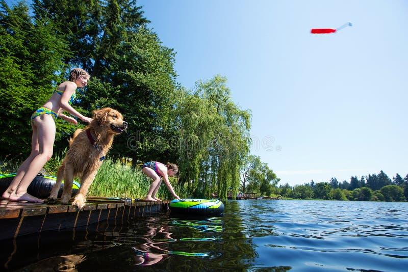Lura den leka fetchen med deras guld- retrieverhund royaltyfri fotografi