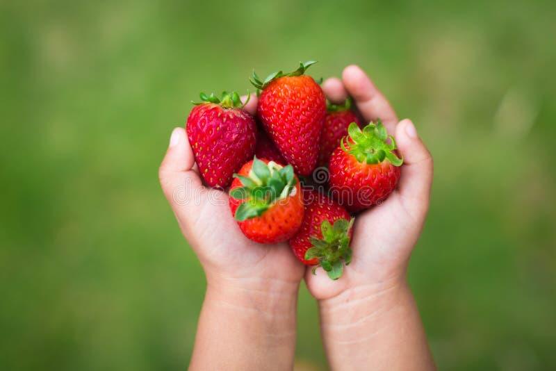 Lura lite hållande organiska jordgubbar som är främsta av en grön bakgrund royaltyfri foto