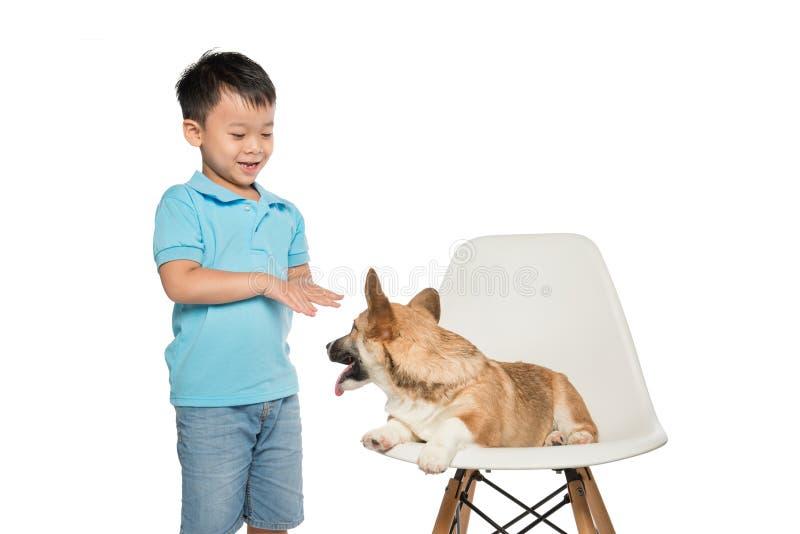 Lura pojken som spelar med den lilla pembrokecorgihunden som isoleras på vit arkivbilder