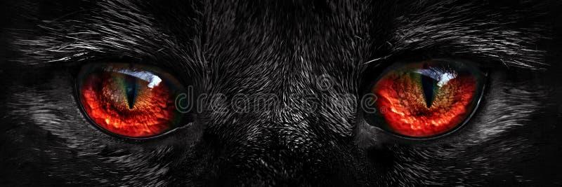 Lurvig gigantisk röd ögoncloseup fotografering för bildbyråer